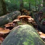 Bildbearbeitung - Pilze im Kirnitzschtal