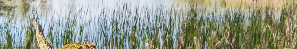 Guttauer Teiche – im Land der 1000 Teiche
